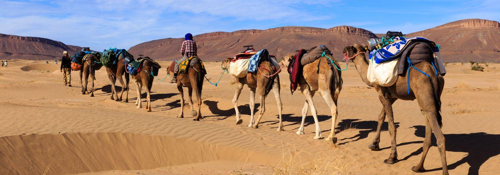 Explore the Magic of Morocco with Local guides